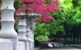 """炎炎夏日,桂林七星景区起""""疯""""了"""